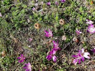 JoAnn Wild Flower Pick